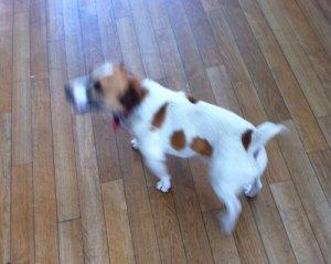 wordpress dog in dublin